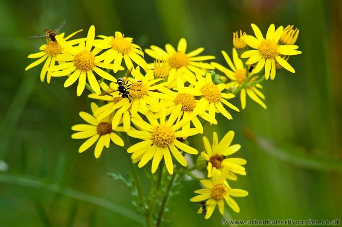 Common Yellow Garden Flowers yellow flowers | urban butterfly garden