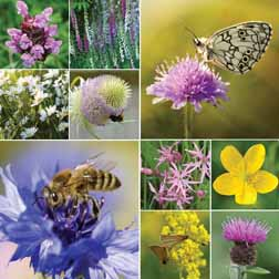 Wildflower Collection - Hardy Perennials